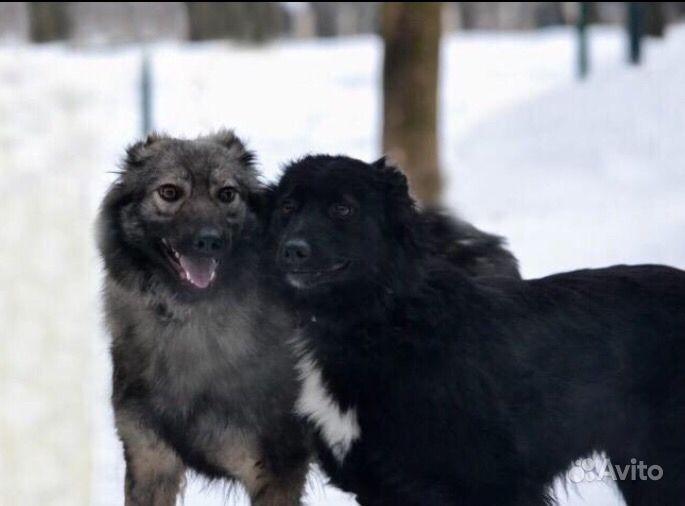 Собака в добрые руки в Москве - фотография № 1