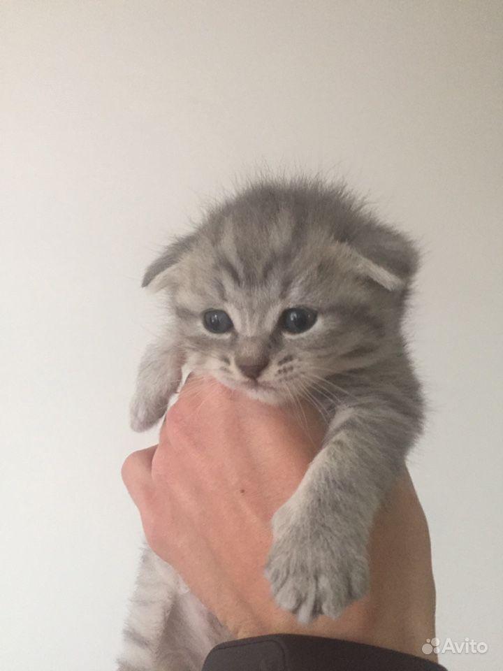 Котята в Тамбове - фотография № 3
