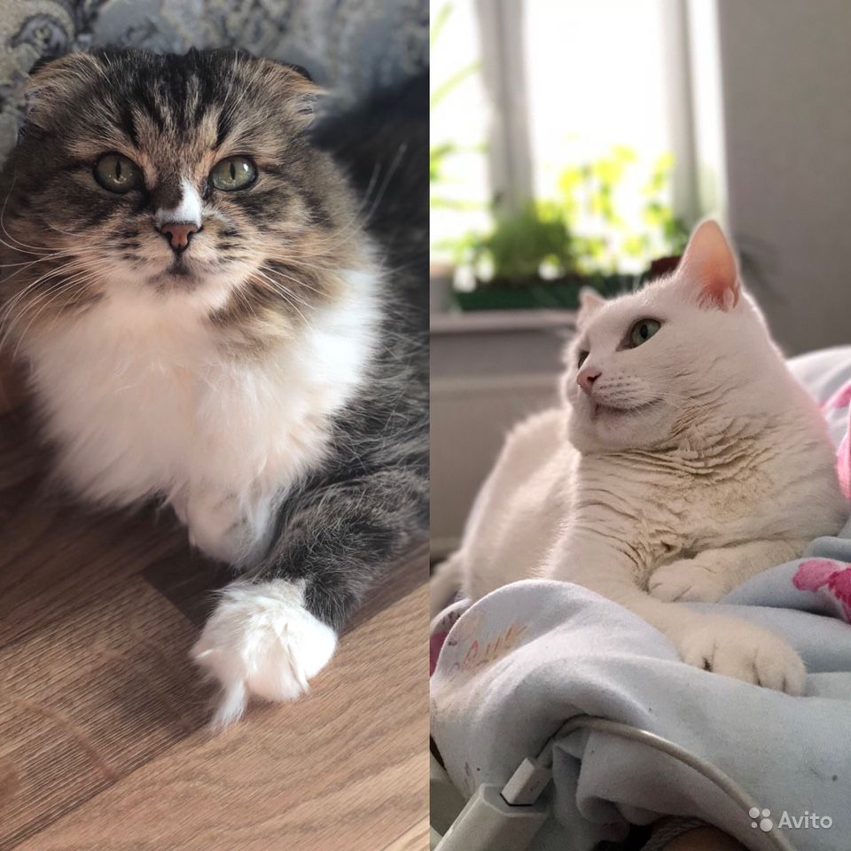 Отдам кошек