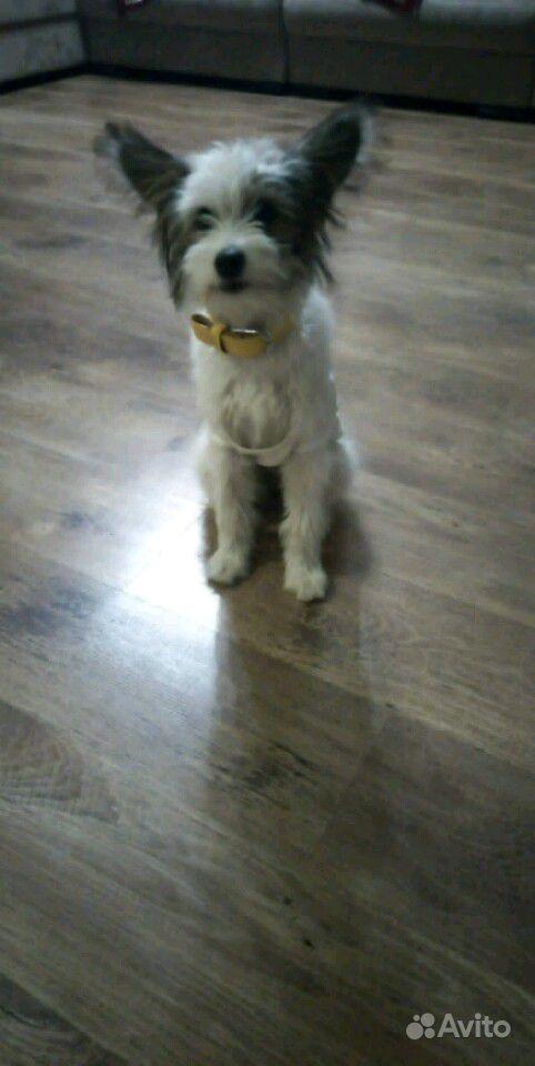 Щенок, 4 месяца