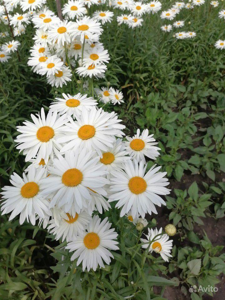 Растения купить на Зозу.ру - фотография № 5
