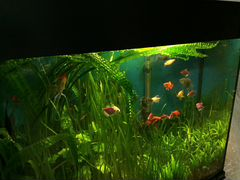 Продаётся аквариум на 160л