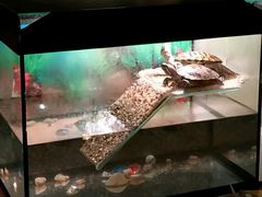 Аквариум с двумя черепашками