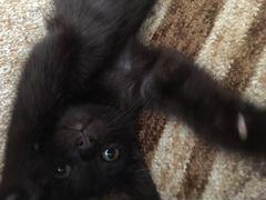 Отдам котёнка (кошечку) в хорошие руки