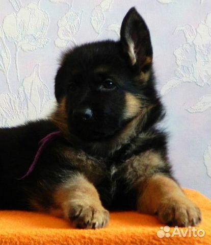 Дать объявление о продаже щенков пермский край дом в греции частные объявления
