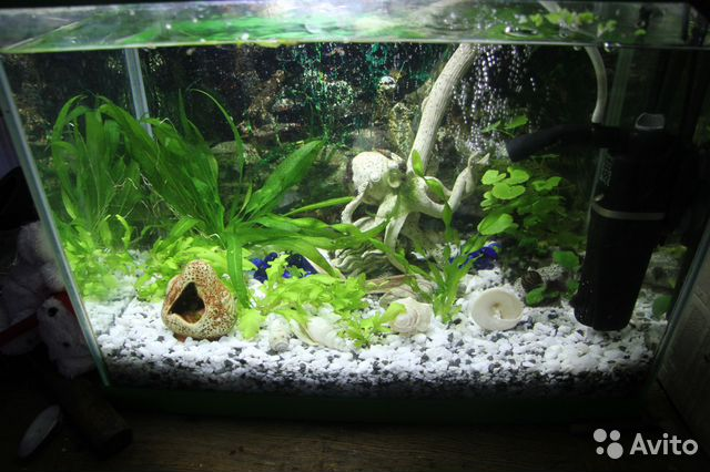 Купить аквариум в спб недорого авито