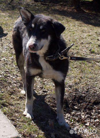 Ляля - собака из приюта с милым носиком купить 4