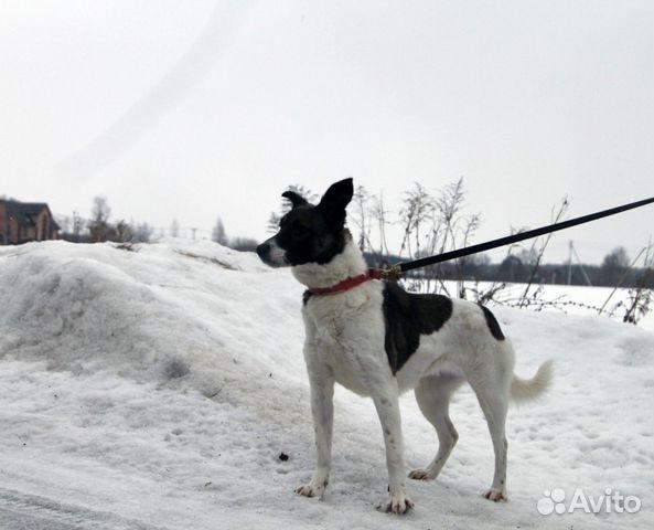 Линда купить на Зозу.ру - фотография № 9