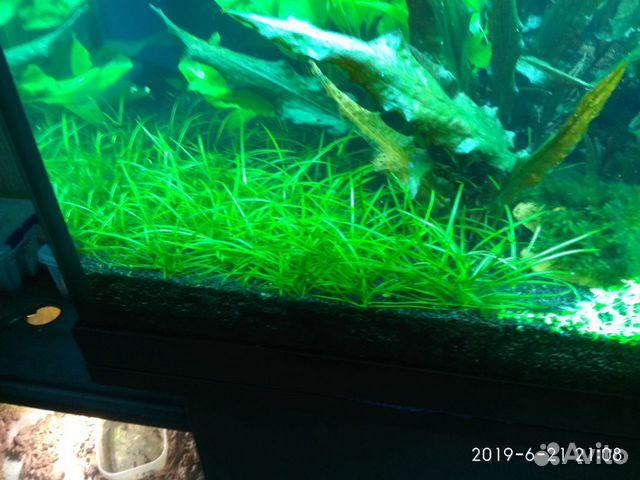 Аквариумные растения 89372502099 купить 3