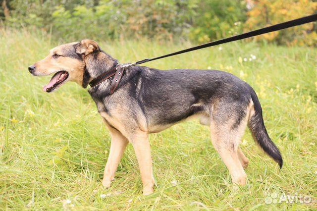 Красивейший пёс в дар в добрые руки купить на Зозу.ру - фотография № 4