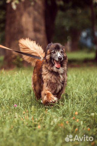 Добрый пес в добрые руки купить на Зозу.ру - фотография № 4