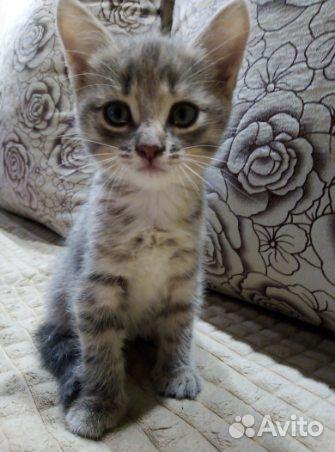 Отдам котенка в хорошие руки  89125741885 купить 2