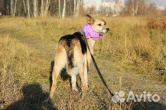 Необыкновенная собака в дар купить на Зозу.ру - фотография № 8