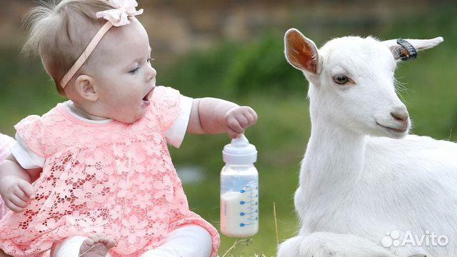 Козье молоко  89887273166 купить 2