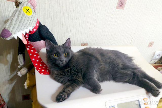 Шикарный серый кот в добрые руки  89038039728 купить 4