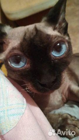 Отдам кошку в добрые руки  89785688266 купить 3
