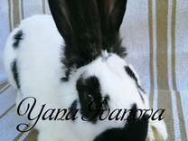 Крольчата породы Немецкий пестрый строкач