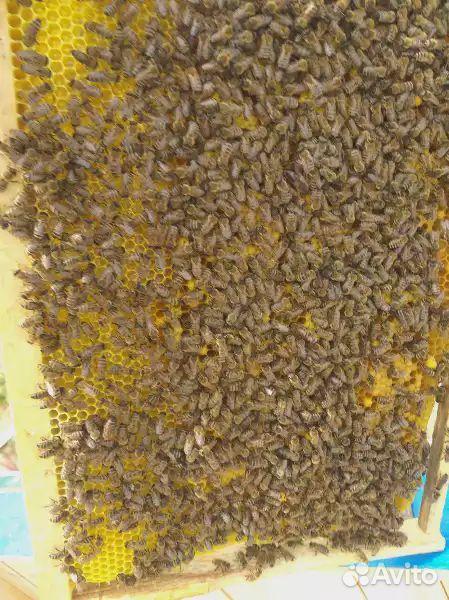 Пчелы пакеты по уралу курган екатиринбург Челябинс