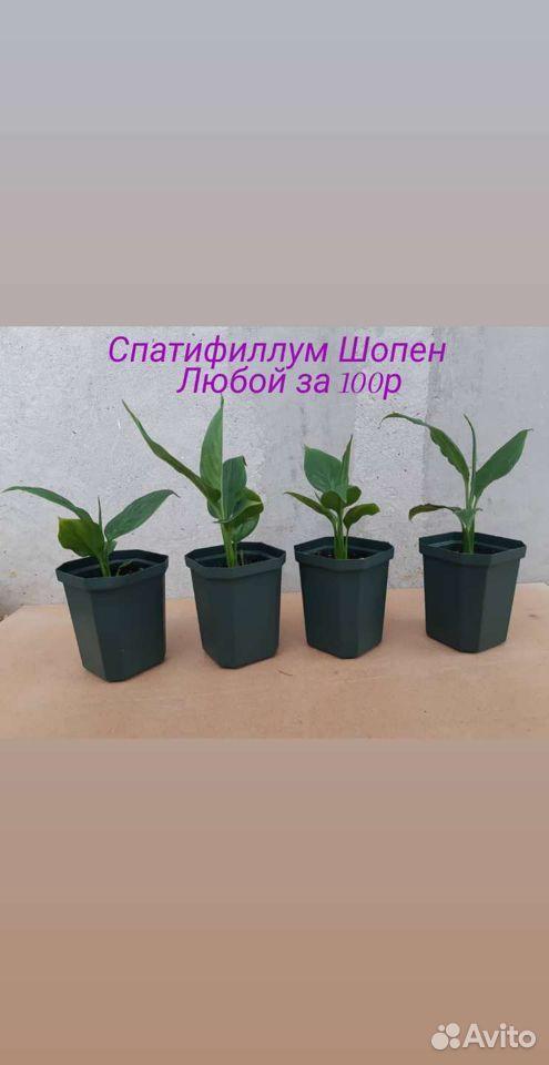Цветы  89176088037 купить 9