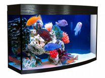 Изготовление и продажа аквариумов, и террариумов