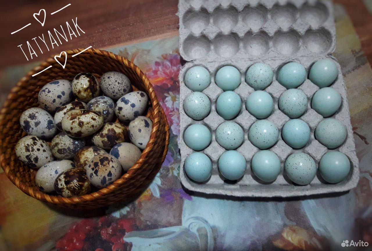 Инкубационные яйца перепелов селадон