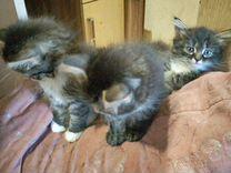 В добрые руки котятки
