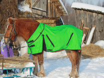 Амуниция для лошадей и пони