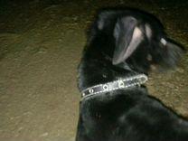 Отдам собаку в хорошие руки зэ дворняшку — Собаки в Геленджике