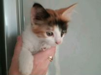 Отдам красивых котят в добрые руки